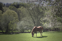 North Salem Horses